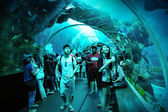 Tourists walking along the tunnel in S.E.A. Aquarium