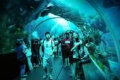 Turisté pěšky podél tunelu v akváriu s.e.a.
