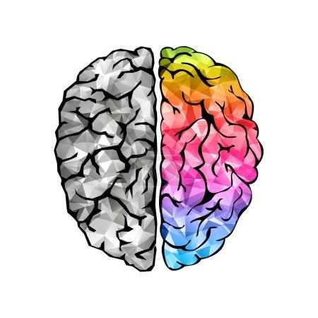 Illustration pour Concept créatif du cerveau humain. Côté gauche et droit. Concept hémisphères gauche et droit du cerveau. Illustration vectorielle - image libre de droit
