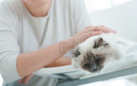 owner is caressing cat