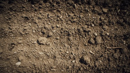 Photo for Fertile humus soil in the farmland field, texture close up - Royalty Free Image