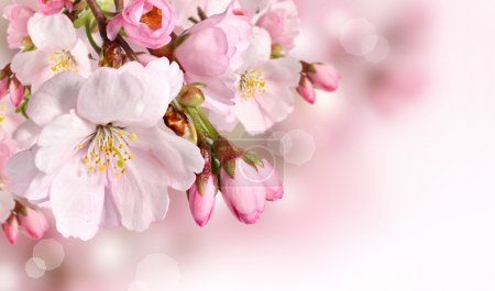 Photo for Spring flowers background with pink blossom - Royalty Free Image