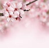 """Постер, картина, фотообои """"Весенние цветы фон с розовый цветок"""""""