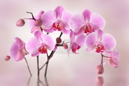 Photo pour Design de fond fleurs orchidées rose - image libre de droit