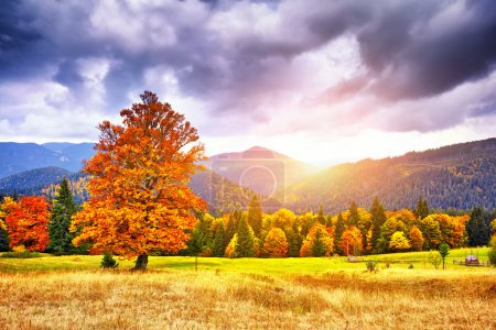 Photo for Majestic particolored forest with sunny beams. Natural park. Dramatic unusual scene. Red and yellow autumn leaves. Carpathians, Ukraine, Europe - Royalty Free Image