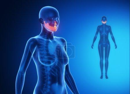 MANDIBLE  bone scan