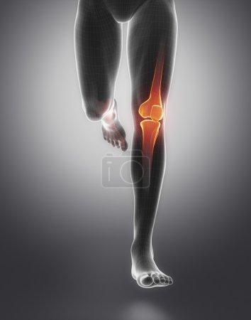 Knee anatomy of running human