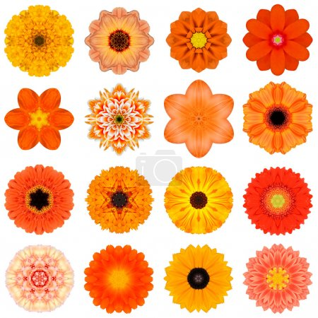 Foto de Gran colección de varias flores de naranja patrón concéntrico. patrones caleidoscópicos mandala aislados sobre fondo blanco. Rosa concéntrico, daisy, prímula, girasol, Clavel, caléndula, gerber, Dalia zinnia flores en colores naranja. - Imagen libre de derechos