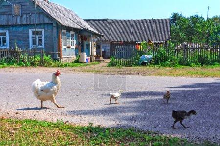 Familia de pollo grande