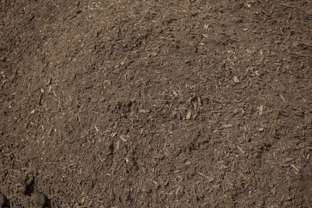 healthy compost dirt
