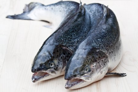 Close  up on a whole raw salmons on wooden background