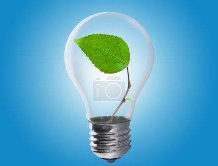 Photo pour Ampoule avec une feuille qui pousse à l'intérieur. Environnement, écotechnologie et concept énergétique . - image libre de droit