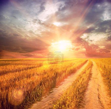 Photo pour Champ de blé ensoleillé - image libre de droit