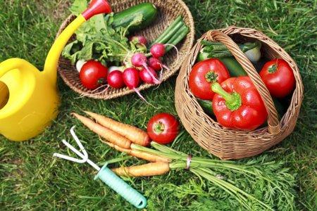 Photo pour Légumes biologiques dans le jardin-jardinage-légumes-bio - image libre de droit
