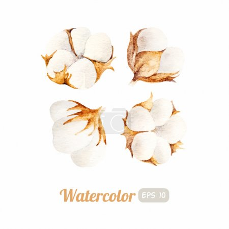 Illustration for Set of Watercolor cotton flowers. Vector illustration - Royalty Free Image