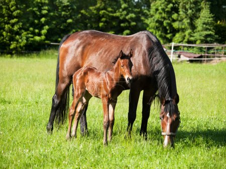 Mother and baby horse on meadow
