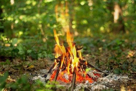 Photo pour Flamme chaude du feu de camp dans la forêt - image libre de droit