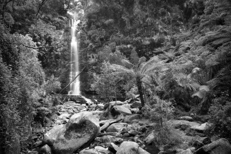 Photo pour Chute d'eau d'Erskine Falls dans le parc national d'Otways le long de la Great Ocean Road, Australie en noir et blanc - image libre de droit