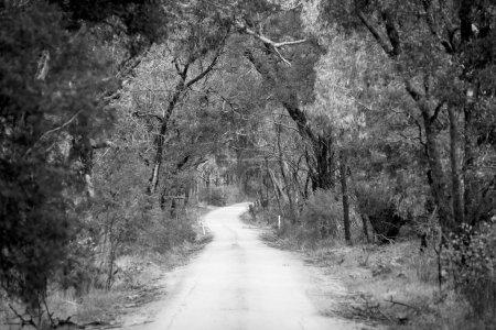 Photo pour Chemin de terre serpentant à travers une forêt dense en hiver en foyer peu profond en noir et blanc - image libre de droit