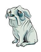 Cartoon bulldog with sad eyes Isolated on white