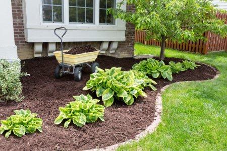 Garden maintenance in spring doing the mulching of...