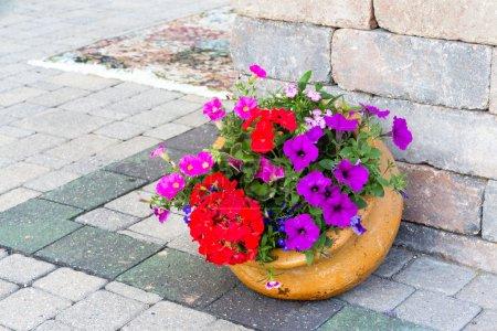 Ornamental display of colorful flowers