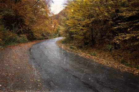 Curving road in autumn forest - vintage photo