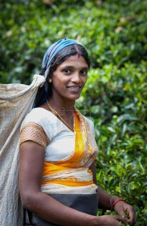 MASKELIYA, SRI LANKA - JANUARY 5 : Female tea picker in tea plan