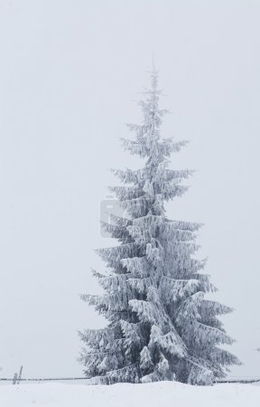 Winter landscape with snowy fir trees