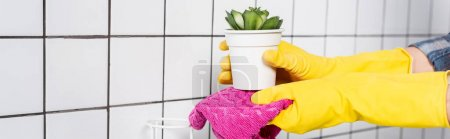 Cropped view of woman cleaning plant with rag in bathroom, banner
