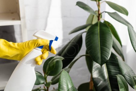 Photo for Cropped view of hand in rubber glove holding bottle near plant on blurred background - Royalty Free Image