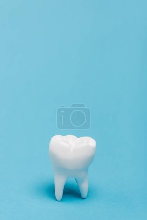Photo for Close up view of white tooth model on blue background with copy space - Royalty Free Image