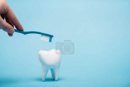 Ausgeschnittene Ansicht einer Frau mit Zahnbürste in der Nähe eines weißen Zahnmodells auf blauem Hintergrund