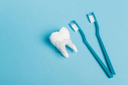Photo pour Vue du dessus du modèle de dent et des brosses à dents sur fond bleu - image libre de droit