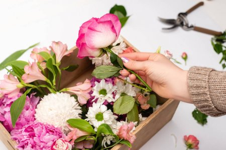 cropped view of woman holding pink flowers near wooden box on white