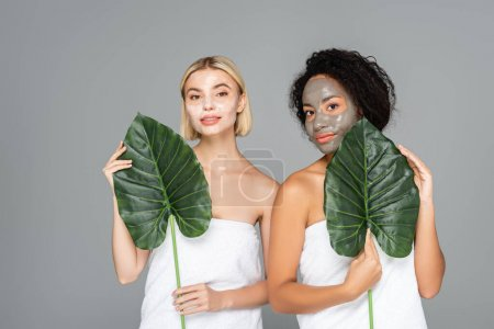 Photo for Interracial women with facial masks holding tropical leaves isolated on grey - Royalty Free Image