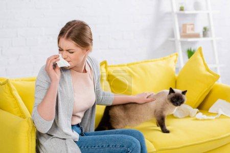 Photo pour Jeune femme avec un tabouret tenant la serviette près du chat siamois - image libre de droit