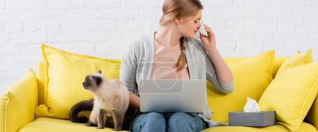 Freelancer sneezing near laptop and siamese cat on couch, banner