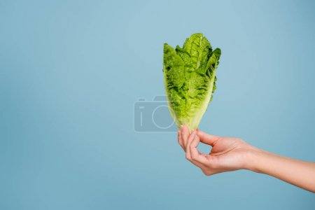 partial view of woman with fresh green lettuce isolated on blue