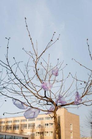 Zellophanbeutel am Baum in der Stadt vor blauem Himmel, ökologisches Konzept