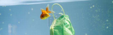 Photo for Goldfish near protective mask in water, ecology concept, banner - Royalty Free Image