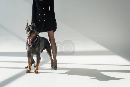 Photo for Partial view of woman in black blazer dress near doberman on grey background with shadows - Royalty Free Image