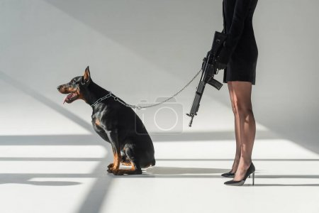cropped view of elegant woman with rifle near doberman on chain leash on grey background with shadows