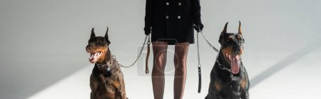 cropped view of stylish woman with doberman dogs on chain leashes on grey background, banner