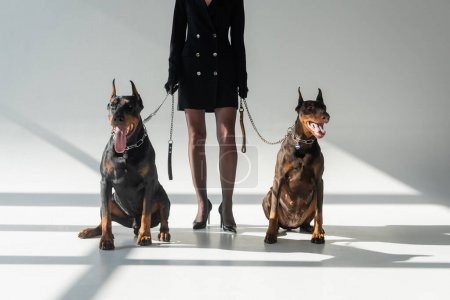 cropped view of elegant woman with two dobermans on grey background with shadows