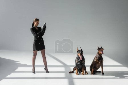 trendy woman standing with gun near dobermans on grey background with shadows