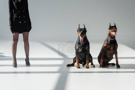 Foto de Vista recortada de mujer elegante cerca de perros doberman sobre fondo gris con sombras - Imagen libre de derechos