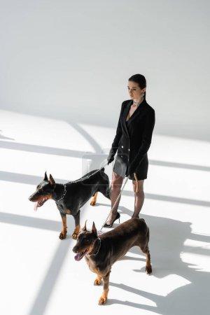 Foto de Vista de ángulo alto de la mujer de moda con perros doberman en correas de cadena sobre fondo gris con sombras - Imagen libre de derechos