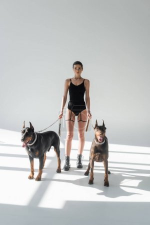 stylish woman in bodysuit and leather boots with dobermans on chain leashes on grey background with shadows