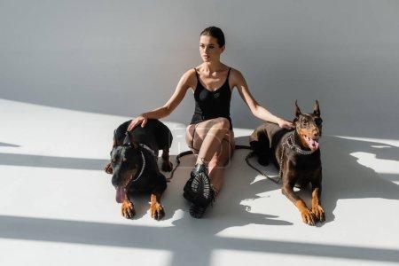 Photo pour Femme sexy en body et bottes assis avec dobermans sur fond gris avec des ombres - image libre de droit